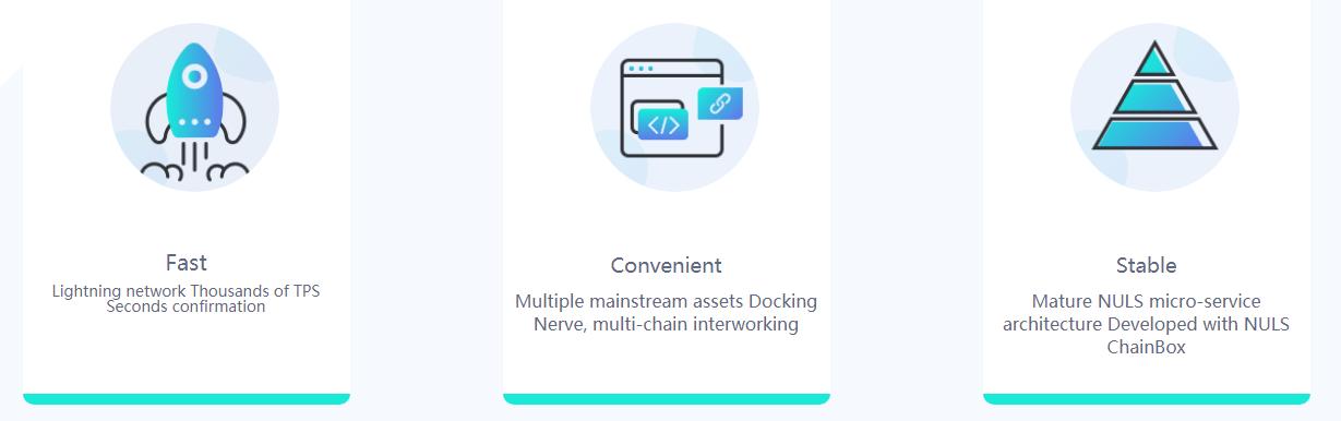 NerveNetwork